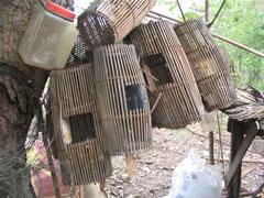 カンボジア、スタディーツアー