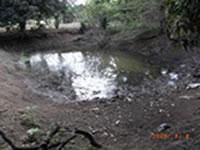 命綱だった、ため池の水
