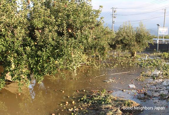 浸水したリンゴ園